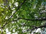 Treebottom