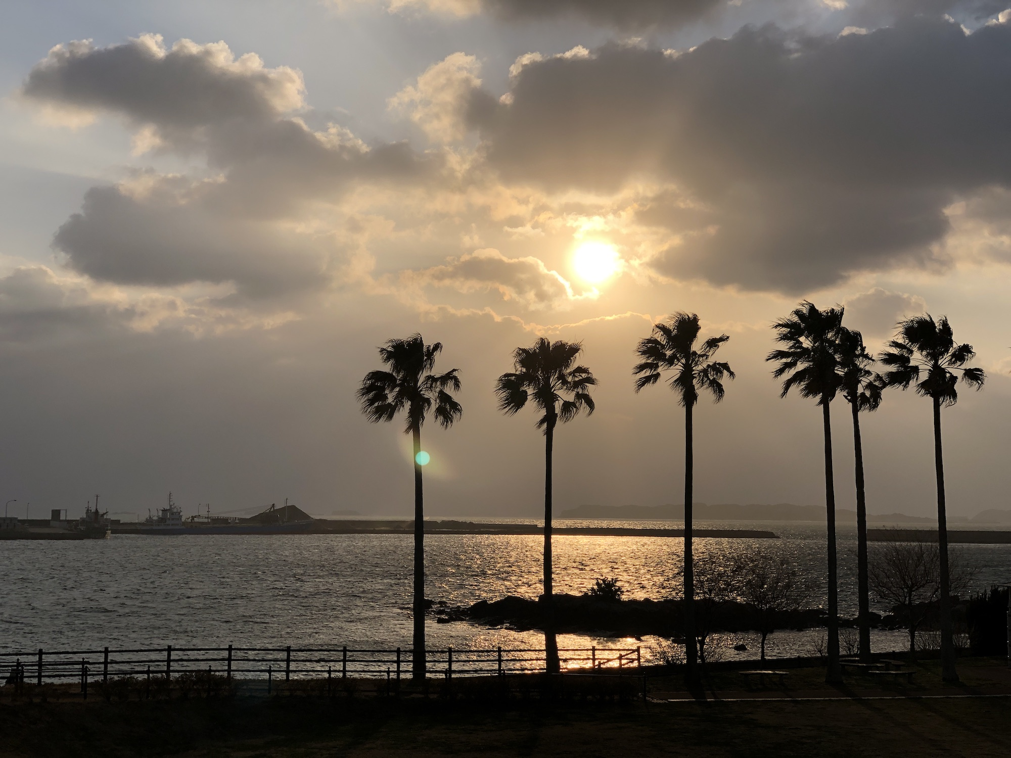 Sunset with palm tree silhouettes